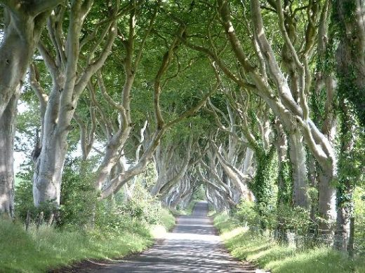Photo of The Dark Hedges