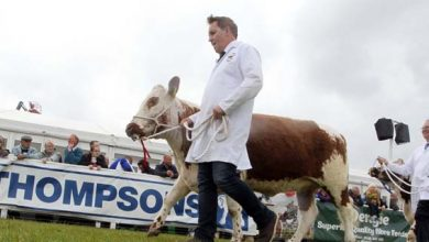 Photo of The Balmoral Show –  From sheep shearing to show jumping