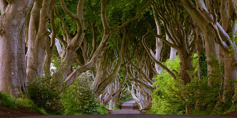 Dark Hedges Antrim Northern Ireland morning trees road